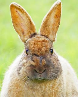 Bunny Head Shot