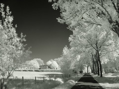Winterlook in summertime (Fr@nk ) Tags: ir infrared sony frnk europe summer landscape chlorophyl bouncing light sky meadow fields farming limburg holland netherlands agroculture f717 dreamy topf25 topf50 topf100 krumpaaf mrtungsten62 interesting interestingness
