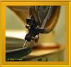 Plattenspieler Bingola HMM (magritknapp) Tags: bingolakindergrammophon makro technik museeum berlin macromondaybackinthedayhmm