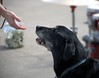 Reaching Out (Scott 97006) Tags: hand human dog canine animal connection reach diagonal