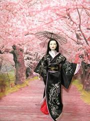 Cherry Blossoms4 (annesstuff) Tags: annesstuff doll fashiondoll tonnerdoll roberttonner memoirsofageisha kimono geisha japan cherryblossoms spring