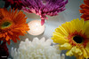 Closeup of colorful gerbera background (rawpixel.com) Tags: africandaisy attractive background beautiful beauty bloom blossom botanical botany candle chrysanthemum closeup collection colorful daisy decoration design drop elegance floating flora floral flower flowery fresh garden gerbera gerberadaisy healthy isolated life macro name natural nature pamper petal plant relaxation romantic spa spring summer surface texture textured transvaaldaisy wallpaper wet whitechrysanthemum zen