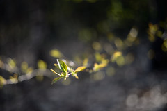 spring time (Vadim Beldiy) Tags: nature ngc ngs light forest tree foliage wood bokeh extremebokeh f2 helios81h helios81n mchelios81n nikon nikond600 50mm springtime spring vadimbeldy vadimbeldiy бельдийвадим вадимбельдий мсгелиос81н гелиос81н гелиос81 nationalgeographic macro beautifulexpression photographer manuallens manualfocus greatphotographers mf naturebynikon