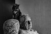 petit à petit les chats deviennent l'âme de la maison - Jean Cocteau (jara311) Tags: chats animaux vieux monochrome noiretblanc