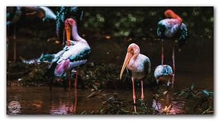 The posing birds!