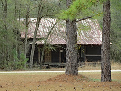 Cabin And Trees. (dccradio) Tags: whiteoak nc northcarolina bladencounty outside outdoors harmonyhall harmonyhallplantation park museum history historic historical livinghistory cabin house building architecture old porch ground roof