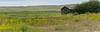 Yellow and Green (maureen.elliott) Tags: 7dwf floratheme landscape summer saskatchewan prairies wildflowers grasses grasslandsnationalpark oldbuilding abandoned hills nature