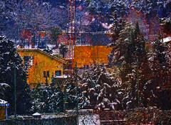 El único día de nieve frente a mi ventana (desde mi corazón) Tags: nieve casas pinos color invierno textura