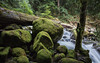 Balancing Act (John Westrock) Tags: nature river water moss rocks trees forest washington pacificnorthwest canoneos5dmarkiii canonef2470mmf28lusm