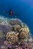 Ray & Coral(Pescador Island)1 (Allen Lee(houpc)) Tags: 2018 nikon nikond810 nikkor16mmfisheye landscape wideangle philippines moalboal fish fins coral pescadorisland