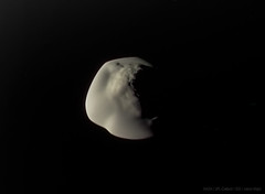 Atlas (Lights In The Dark) Tags: atlas cassini moon saturn space nasa