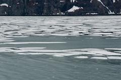 MS Westerdam - 7 Day Alaska May 2018 - Glacier Bay-278.jpg (Cindy Andrie) Tags: alaska hollandamerica d800 nature britishcolumbia beach victoriabc westerdam glacierbay landscape nikon cindyandrie canada andrie glaciers nikond800 cindy
