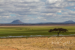 African Landscapes (robsall) Tags: 2016 24105 24105f4isusm 5dm3 5dmark3 5dmarkiii 5dmiii africa africatourism africawildlifephotography africanwildlife canon canon24105f4isusm canon24105mm canon5d canon5dmarkiii canon5dm3 canoneos canoneos5dm3 family landscape robsallaeiral robsalldrone robsalldronephotography robsallphotography robsallwildlifephotography tanzania tanzania2016 vacation manyararegion
