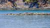 Seals-180408-2 (tombealphotos) Tags: filmsimulations harpswell lens longexposure maine velvia xpro2 xf55200mmf3548rlmois