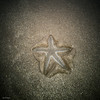 beached  star (sami kuosmanen) Tags: india asia arambol beach ranta sand star sea travel intia