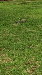 v2018 April 1, Wilson Park (King Kong 911) Tags: lions floweringtrees squirrels wilsonpark unavideos