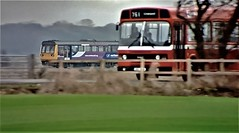 The Pacer Train & The Leyland National Bus. (ManOfYorkshire) Tags: leyland national national2 bus pacer train class142 bodypanels same derived similar construction nbc northerntrains road rail