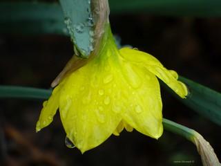 Failed to Blossom