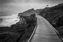 cliff walk, Sydney 2015  #043 (lynnb's snaps) Tags: 2015 35mm curlcurl bw beach boardwalk cliffwalk film fp4 landscape ocean rangefinder waves olympusxa ilfordfp4 kodakxtoldeveloper coast seashore sydney australia ishootfilm