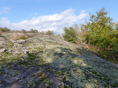 Sun-Shade Interface (geodeos) Tags: sheffieldconservationarea canadianshield sunlight shade shadow granite rock stone slope forest tree grass lichen moss scenery landscape nature