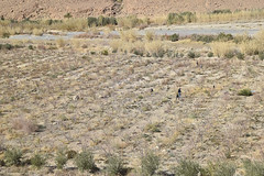 Farming Near an Oasis, Morocco (meg21210) Tags: farming oasis ziz river riverziz morocco farm sahara desert people farmers ouedziz