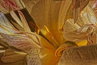 Bon dimanche à tous mes Amis de Flickr - Good sunday for all my Flickr's Friends