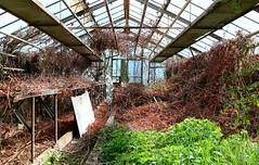verlassenes Treibhaus (rudolf eremit) Tags: treibhaus gärtner pflanzen verlassen vergessen leerstand