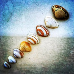 [/] . Beach haul. 🐚 . #shells #shell #beach #northsea #coast #netherlands #noordwijk #breakers #diagonal #diagonalley #seaside #colours #color #sunnyday #sunny #spring #sunday (daveoleary) Tags: beach haul 🐚 shells northsea coast netherlands noordwijk breakers diagonal diagonalley seaside colours color sunnyday sunny spring sunday