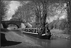 EBONY (Jason 87030) Tags: ebony narrowboat picnic sandwiches swan nice plaesant jasmine day may 2018 local braunston cut canal bw bbw blackandwhite noir blanc frame border bireds trees naked branch spring woman ivory water guc grandunion oxfordcanal boating leisure uk england photo