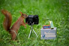 Squirrel (Steffi Baumann - LiebeKunst-Photography) Tags: eichhörnchen squirrel animal cutanimal leipzig