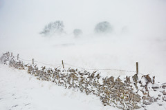Drifting (matrobinsonphoto) Tags: snow snowing drift drifting spindrift yorkshire dales national park north northern landscape uk britain british wall white whiteout winter wintry swaledale arkengarthdale booze sleigh gill trees frozen outdoors beautiful