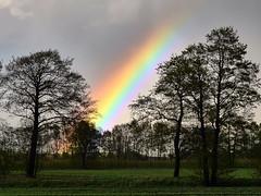 Regenbogen in der Elbmarsch (mechanicalArts) Tags: rainbow regenbogen trees tree baum bäume elbmarsch nikon series e