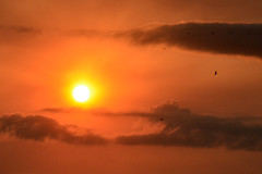 A Little Luck (NaturalLight) Tags: sunset orange chisholmcreekpark wichita kansas