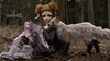 Willa and The Fox I (BblinkK) Tags: mirodoll 60cm wind sd bjd fox posable easternwindstudios