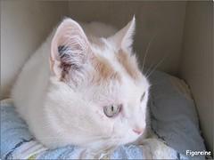 Mouna dans sa petite maison sur la terrasse  profite du temps un peu plus clément en ce moment (Figareine- Michelle) Tags: chat fantasticnature coth5 bestofcats catmoments vg~catsgallery fabuleuse