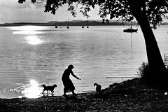 Two dogs in the sunset (gerard eder) Tags: world travel reise viajes europa europe deutschland germany lake alemania bavaria baviera bayern beach playa paisajes panorama landscape landschaft lago see seascape bw sw blackandwhite blackwhite blancoynegro monochrome wasser water sunset sonnenuntergang puestadesol atardecer natur nature naturaleza outdoor