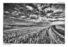 Toscana (guitarmargy) Tags: bianconero siena toscana landscape paesaggio panorama campi erba nuvole sky bw natura marcellobardi prato veduta grano via sentiero