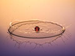 Oops, I broke it! (susie2778) Tags: olympus omdem1mkii 60mmmacrof28 studio flash splashartkit2 splash water waterdrop reflections bubble olympusuk