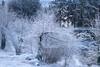 Mount Tabor (Tony Pulokas) Tags: mounttabor mttabor mounttaborpark portland oregon tilt blur bokeh forest tree douglasfir winter snow