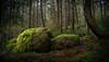 100 Acre Wood 01 (ScottyBgood) Tags: scottyandronnyshow britishcolumbia vancouverisland 100acrewood