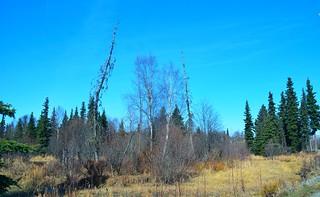 Alaska Anchorage Campbell Creek Trail