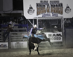 024693763289-97-Cowboy Bull Riding at the Clark County Fair and Rodeo-3 (Jim There's things half in shadow and in light) Tags: 2018 america april canon70200lens clarkcountyfairandrodeo mojave nevada southwest usa action animal bull bullriding cowboy desert sports