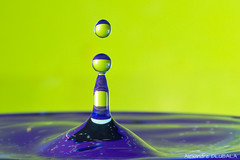 Thick drops (Alexandre D_) Tags: canon eos 70d highspeed colors color colorful couleur colour colours closeup closerandcloser macro macrophotography macrophotographie makro drop drops droplet drip splash splish water waterdrop goutte eau gouttedeau yellow green purple blue liquide liquid art fineart sigma sigma105mmf28exdgoshsmmacro 105mm yongnuo yn565ex neewer lightbox light wirelesstrigger strobist strobism offcameraflash speedlite aputure trigmasterplus trigger shape forme artist artistic