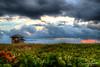 Plage sous les nuages (www.sophiethibault.ca) Tags: 2018 hdr usa plage floride delraybeach aurore avril ciel plantes mer océan paysage