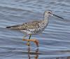 F_042218d (Eric C. Reuter) Tags: birds birding nature wildlife nj forsythe refuge nwr oceanville brigantine april 2018 042218