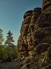 Felswand mit Baum (lebastian) Tags: panasonic dmcgx8 olympus m1240mm f28 sächsische schweiz wandern saxony sachsen mountain fels