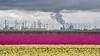 Layers in the landscape (powerfocusfotografie) Tags: tulips flowers agriculture landscape fields industry powerplant outdoors eemshaven groningen netherlands purple yellow henk nikond7200 powerfocusfotografie