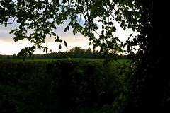 Somerset Sunset (Vikkers88) Tags: sigma1770mm sigmalense countryside landscapes yeovil thornelane eveninglight sunset somerset