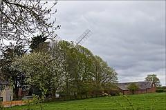 Skidby Windmill (brianarchie65) Tags: rabbit windmill windmills trees grass field blades sky blossom unlimitedphotos flickrunofficial flickruk flickr flickrcentral ukflickr ngc landscape landscapes kingstonuponhull skidbymill eastridingofyorkshire holdernessroad canoneos600d geotagged brianarchie65