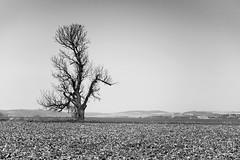 018_Moravian_Tuscany (Overtherainbow changes to KV Photography) Tags: katerinavodrazkova kvphotography landscape moravsketoskansko morava krajina moraviantuscany jiznimorava southmoravia moraviantoscana šardice